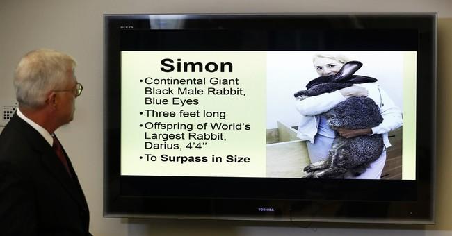 Iowa group sues United over death of giant rabbit, Simon