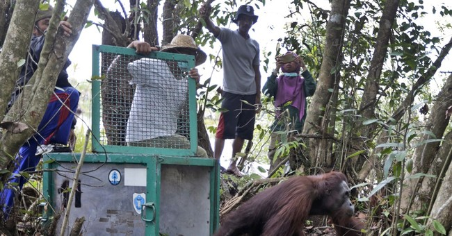 Indonesia orangutan sanctuary says villagers encroaching