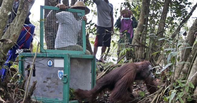 Indonesia orangutan sanctuary says villagers encroaching