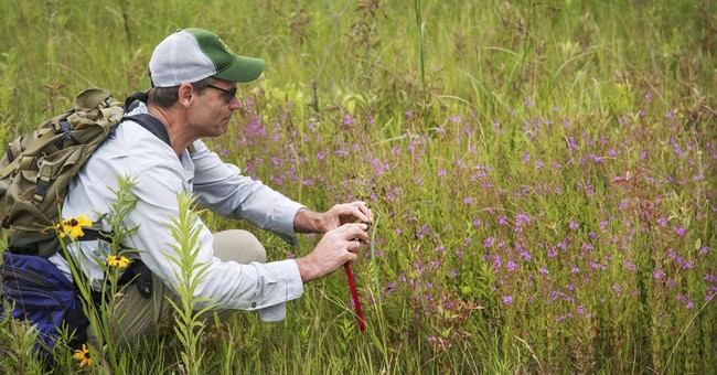 Flowering plant thought to be extinct seen in Vermont
