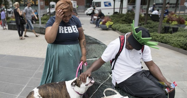 NYC to at-home pet boarders: Legally, you're in the doghouse
