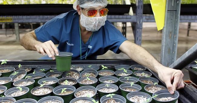 Puerto Rico betting on medical marijuana to help ease crisis