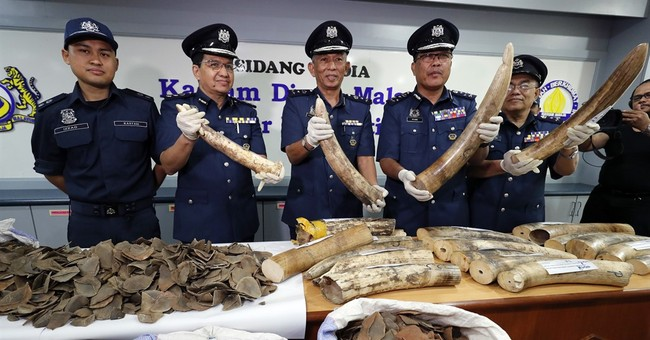 Malaysia seizes ivory, pangolin scales from Africa