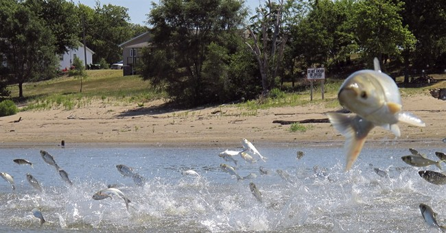 The Latest: Report aims to block Asian carp from Great Lakes