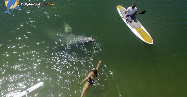 Baby whale gets up close with Southern California beachgoers