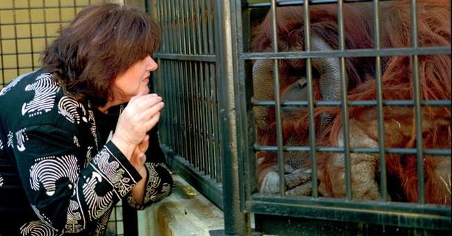 Sign-language speaking orangutan raised like a human dies