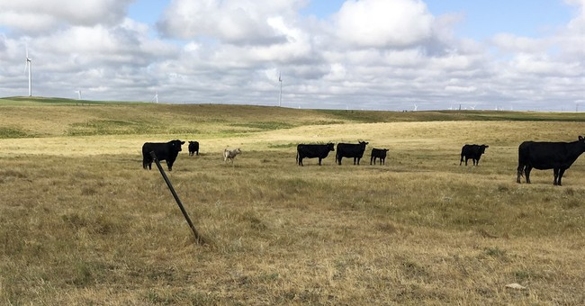 North Dakota governor asks for new federal help amid drought