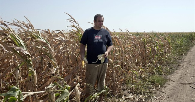 Extreme heat decimating crops in parts of Europe
