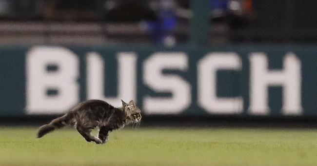 St. Louis Cardinals ask for help in finding the rally cat