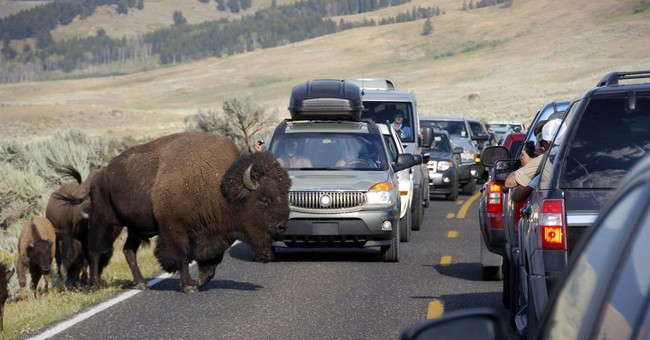Yellowstone Park vehicle traffic nearing capacity