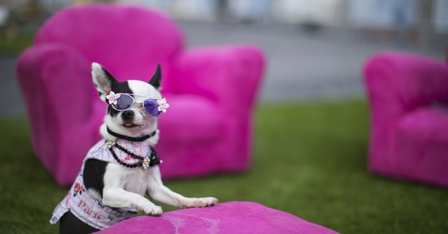 Art exhibit expressly for canine critics debuts in NYC