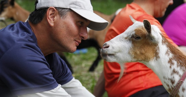 Downward dog meet jumping goat: Goats invade yoga classes