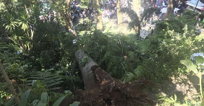13 killed when huge tree crashes down on Portuguese festival