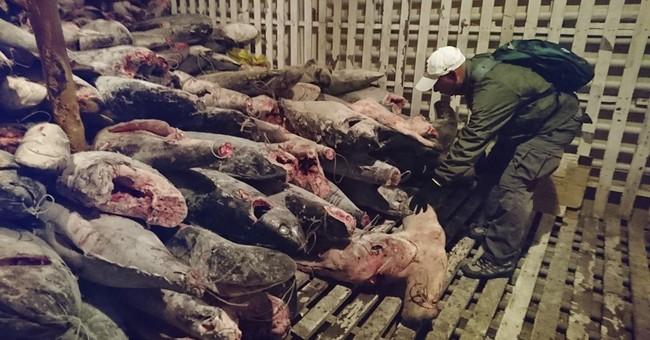 Ecuador: 300 tons of marine animal remains found on ship