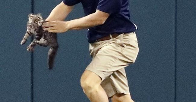 Team: Rally cat to return to Cardinals after quarantine