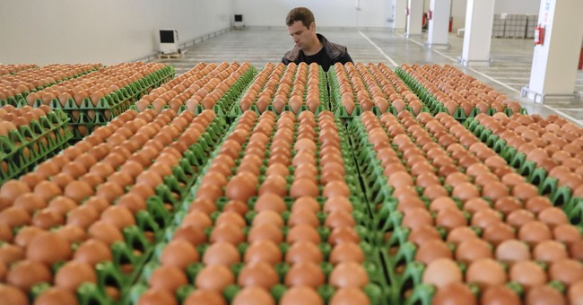 Former Dutch government minister to lead tainted egg probe