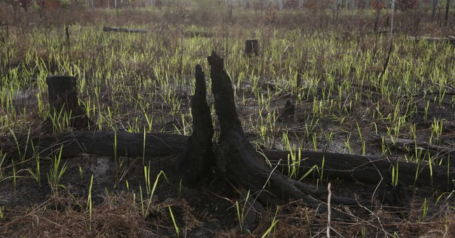 Indonesia forest threatened by development despite new rules