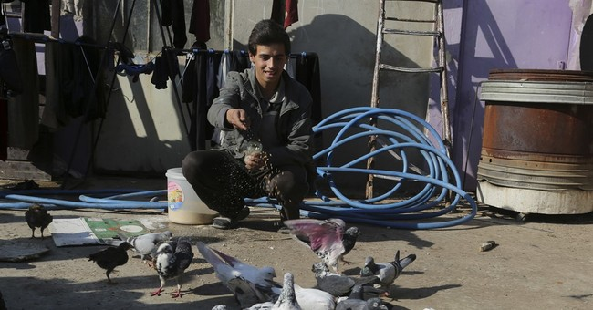 Pet pigeons take flight in Iraq's Mosul as militants retreat