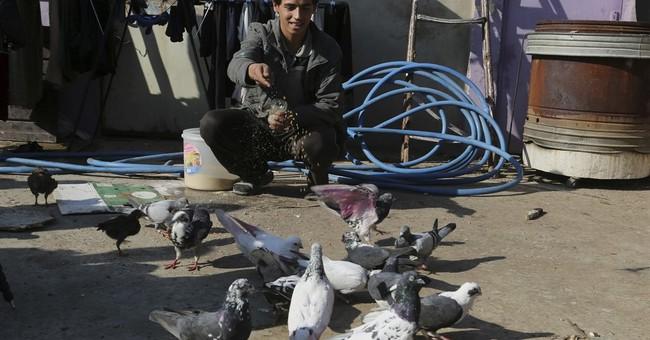 Pet pigeons take flight in Iraq's Mosul as militants retreat