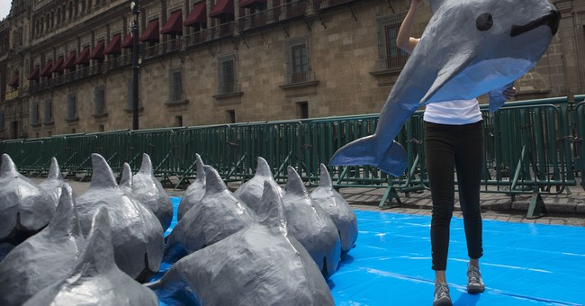 Activists blame Mexican government for near-loss of porpoise