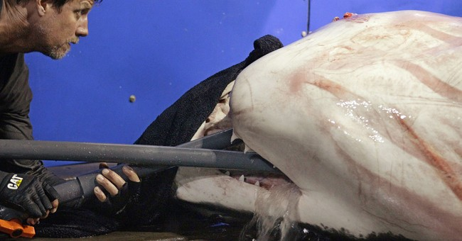 Sharks rattle nerves on Cape Cod, but attacks on humans rare