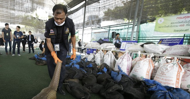 More than 100 endangered pangolins seized in Thailand