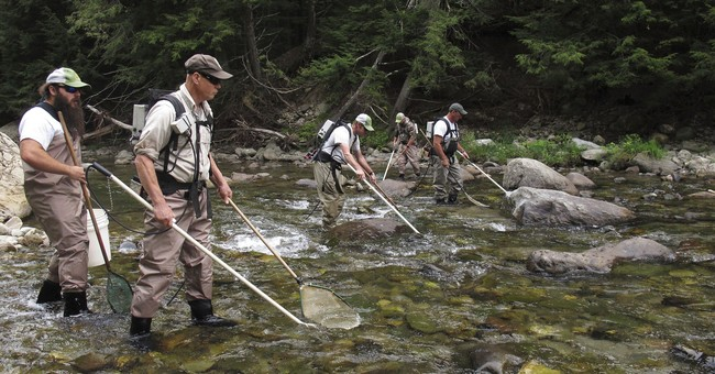 After generations, salmon back in Lake Champlain tributaries