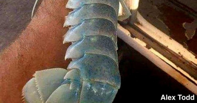 Ghostly, translucent lobster hauled from ocean off Maine
