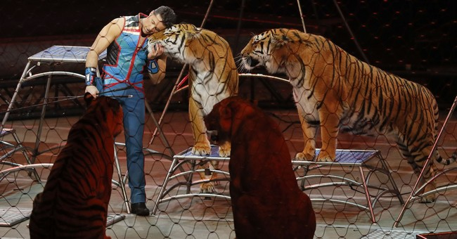 Police shoot and kill tiger that wandered on busy interstate