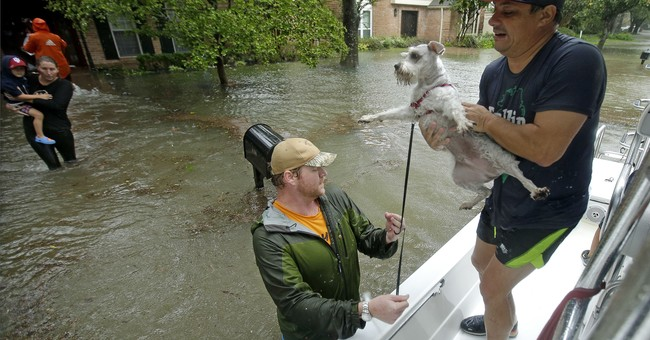 TV network focuses on Harvey animal rescues