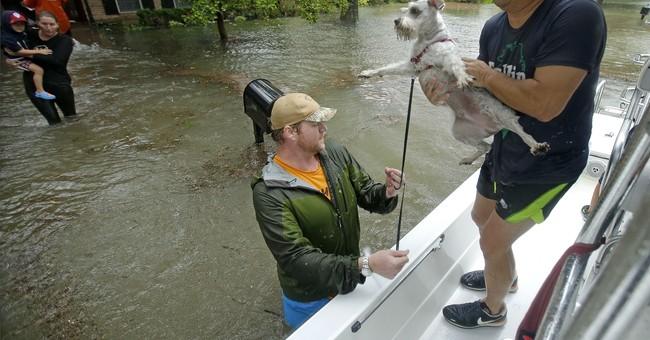 TV network focuses on Harvey animal rescues