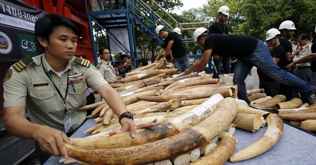 To fight wildlife crime, experts say 'follow the money'