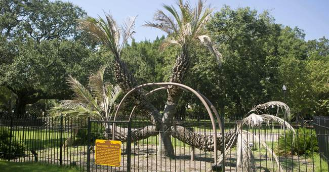 4-headed palm tree 'has had a wonderful life,' official says