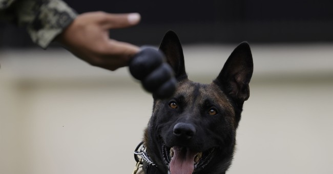 Mexican rescue dog Frida became symbol of earthquake hope