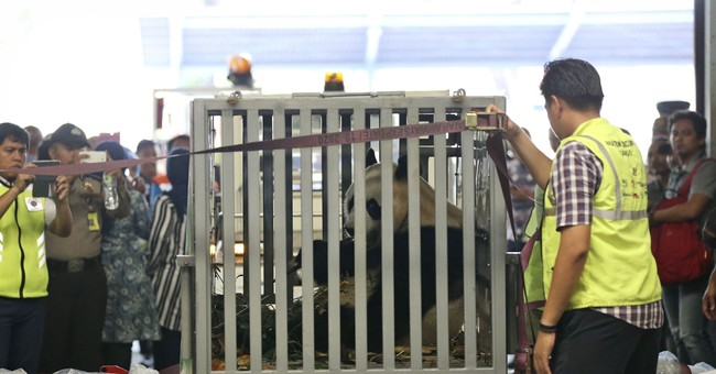 Pair of giant pandas from China welcomed in Indonesia