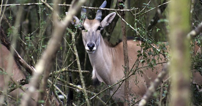 Home on the range: Antelope get new digs in New Orleans