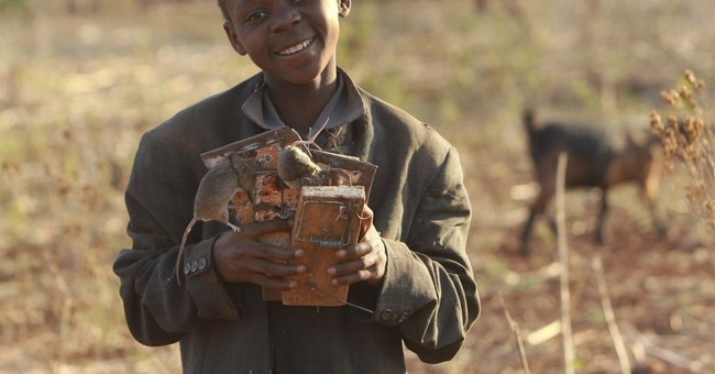 Zimbabwe kids hunt mice and sell them as tasty snacks