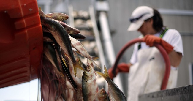 Little fish, big worry: Future of menhaden sparks concern
