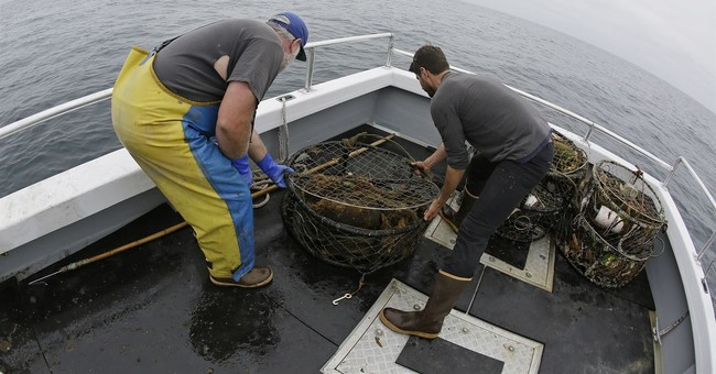 Environmental group sues California over whale-killing gear