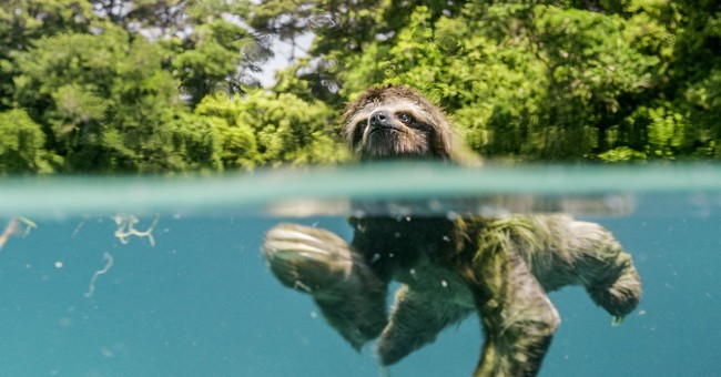 Review: New glorious nature documentary shouldn't be missed
