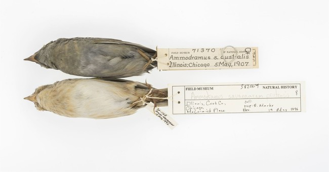 Dirty old birds shed light on key global warming particle