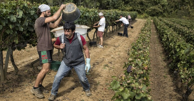 Frost, drought hit wine production hard in Europe