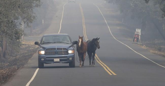 AP Explains: Hot, dry Diablo Wind scorched wine country