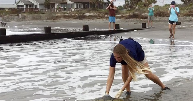 Turtle that swallowed fishing line released in ocean