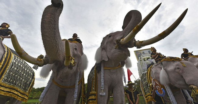 Thai elephants in tribute to late king at ancient capital