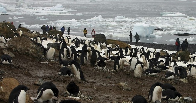 Mass die-off of Antarctic penguin chicks alarms researchers