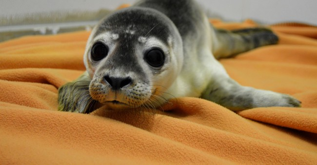 Celebrity-named seal pups rehabilitated, set free on beach