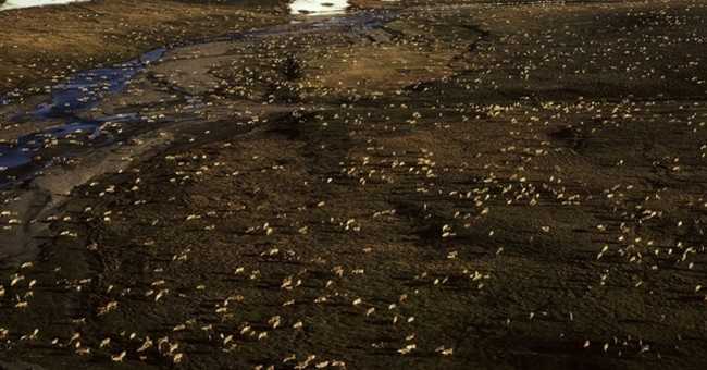 Arctic refuge drilling closer as Senate moves to open site