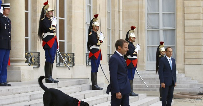 Macron's dog pees on Elysee Palace fireplace as cameras roll