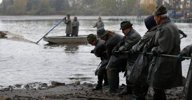 AP PHOTOS: Czech fishermen catch carp for Christmas markets
